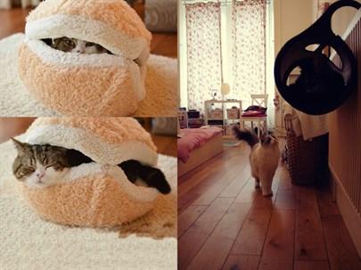 Kedi Severlerin Bayılacağı 17 Müthiş Mobilya