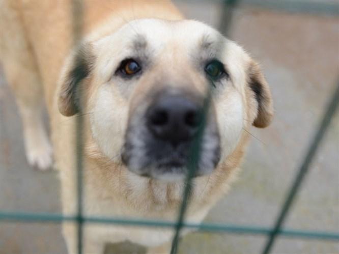 Zorlu Kış Koşullarında Barınak Köpeklerine Yardım Eli