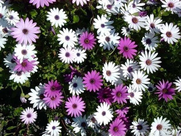 Dikkat merkezinde renk türü yaz