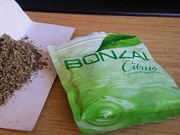 Bitkisel Tehlikenin Adı: Bonzai