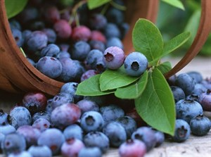 En Sağlıklı Sonbahar Lezzetleri