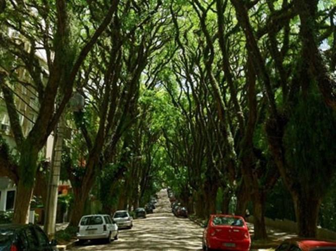 Dünyanın en güzel sokağı
