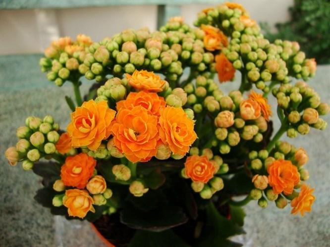 Sonbaharda Ekebileceğiniz Çiçekler!