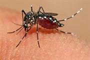 Zika Virüsü Cinsel İlişki Yoluyla Bulaşıyor!