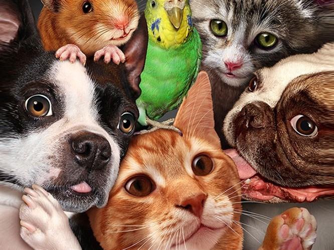 Evcil Hayvanlarla İlişkiniz Karakterinizi Belirliyor!
