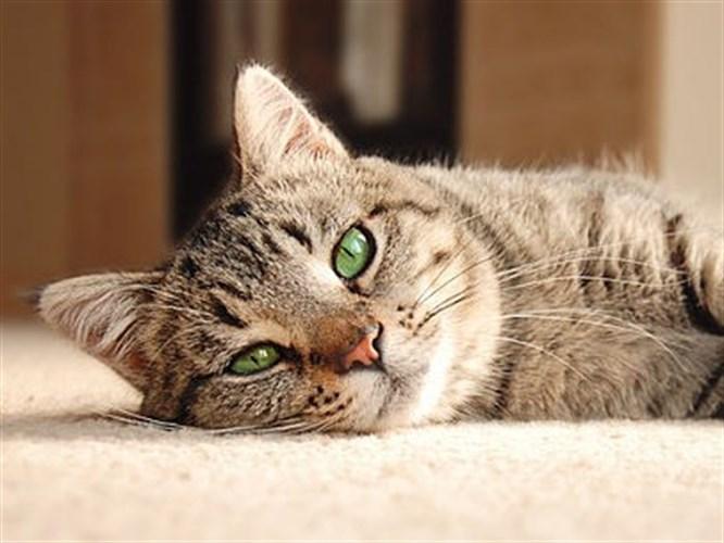 Pratik Bilgiler: Kedi-Köpek Tüylerini Temizleme