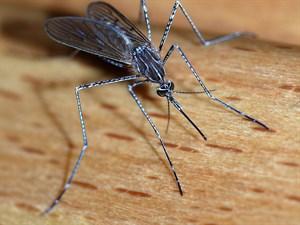 Pratik Bilgiler: Doğal Sivrisinek Kovucu Tablet