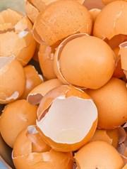 Yumurta Kabuğunu Çöpe Atmayın!