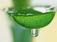 Doğanın Mucizesi Aloe Vera Nasıl Kullanılır?