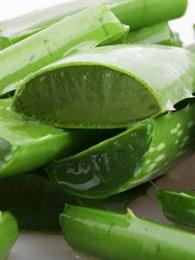 Aloe Verayla Cilt Bakımı Nasıl Yapılır?