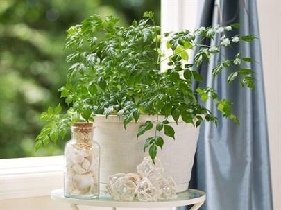 Bitkilerin Latince İsimleri ve Anlamları