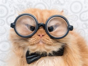 Sosyal Medyanın En Sevimli Kedileri